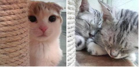猫カフェのネコ