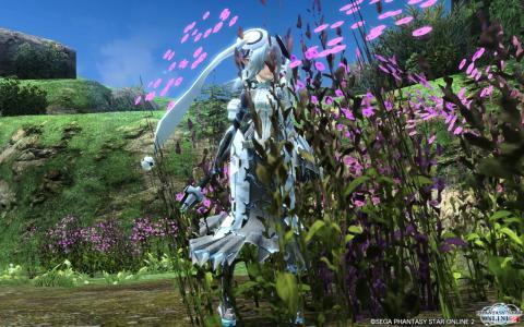 きれいな花1