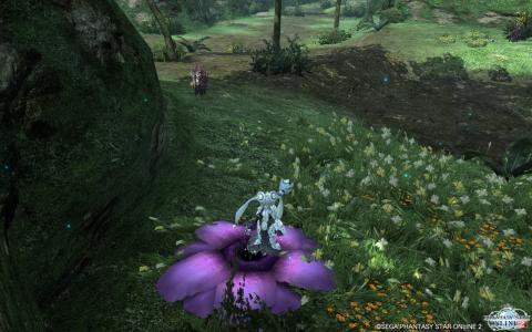 きれいな花2