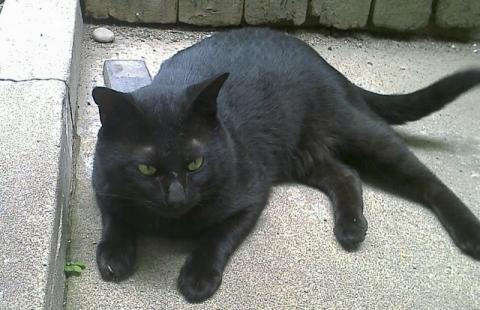 庭には野良猫が我が物顔で占拠!畑は荒らさないで!