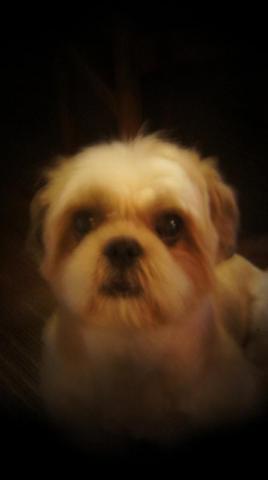 犬ベース2