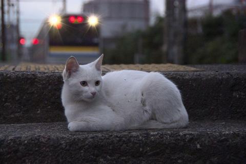 扇町のネコ