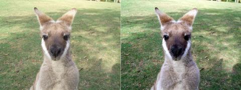 画像1:動物園内にて(右:自動調整前、左:自動調整後)