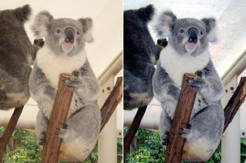 画像2:動物園内建物にて(右:自動調整前、左自動調整後))